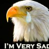 crying bald eagle america sad