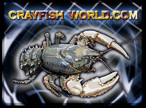 crayfishworld-crawfish-new-orleans-copperplate-gothic-bold
